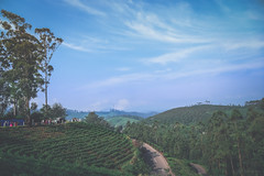 The ViewPoint (Sanz'Y) Tags: morning travel blue mountain colors skyline clouds canon vintage landscape hills adventure exotic munnar sanzy