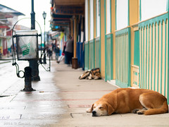 Una siesta feliz (Gonzak) Tags: street trip viaje friends dog amigos happy photo calle lluvia colombia spiders olympus can perro siesta feliz cartagena gettyimages arachnology uz arañas e500 guz 2011 gonzak useta ccongreso