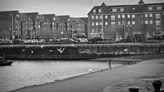 generosity (vfrgk) Tags: people blackandwhite bw woman seagulls monochrome birds architecture buildings flying waterfront candid streetphotography streetscene urbannature feedingthebirds littlepeople urbanlife urbanphotography generosity narrowboats urbanfragment