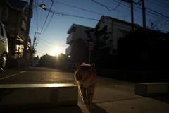 2016210 (Tokutomi Masaki) Tags: animal japan cat tokyo walk     yanaka  2016