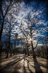 A walk in the park (Vagelis Pikoulas) Tags: park trees winter sun tree canon europe hungary budapest january tokina sunburst pest 6d 2016 1628mm