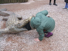 Don't try this at home! (Bennydorm) Tags: silly zoo crazy hilarious funny humour crocodile haha daft
