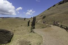 Moai at Rano Raraku (blueheronco) Tags: statues trail pacificocean moai easterisland quarry tuff rapanui isladepascua ranoraraku volcaniccrater rapanuinationalpark