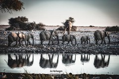 #wildlife #final #europeanphotographeroftheyear #fep #photographeroftheyear #namibia #etosha