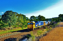 In late afternoon light, 3x81 class locos lead an empty Crisps Creek to Sydney garbage train through Towrang, NSW. (Amateur-Hour Photography) Tags: railroad train canon rail railway trains pointandshoot locomotive locomotives freighttrain australiantrains