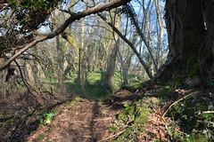 Shadow Man - Free Spirits (Le monde d'aujourd'hui) Tags: shadow man tree ancient spirit hampshire ancientmonument hillfort medstead earthmound