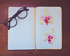 Moleskine e Orquídeas (Beabiabolhas) Tags: wood flowers flores orchid moleskine notebook glasses diary óculos caderno diário orquídea
