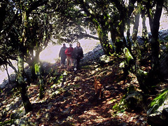 Ikaria's remotest hinterland 47 - entering the ancient oak forest (angeloska) Tags: forest march ikaria aegean greece hikers pezi hinterland hikingtrails   langada ikarians    vrakades  opsikarias