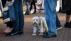 Waiting in line (hehaden) Tags: dog feet standing sussex sweater waiting brighton legs trainers jumper brightonpier palacepier