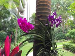 Img507189nx2 (veryamateurish) Tags: singapore shangrilahotel iphone6