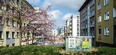 Design Gipfel (Robsan2000) Tags: germany deutschland graffiti design essen kastanienallee gipfel