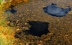 Upper Geyser Basin, Yellowstone, WY (lotos_leo) Tags: travel summer abstract nature pool yellow nationalpark eyes outdoor reality northamerica yellowstone wyoming np geyser wy uppergeyserbasin  oldfaithfulbasin   libertypool crossamerica2015