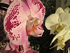 img_3257 (bozhin.karaivanov) Tags: camera flowers plant flores flower planta pflanze blumen blume     plant canonpowershota1400