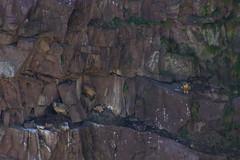 ItsusikoHarria-51 (enekobidegain) Tags: mountains montagne vultures monte euskalherria basquecountry bui pyrnes pirineos mendia buitres paysbasque nafarroa pirineoak bidarrai saiak vautours itsasu itsusikoharria