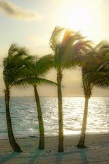 PlayaMujeres_0092 (allen ramlow) Tags: ocean trees sky beach sunrise mexico sony playa palm mujeres a6000