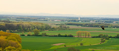 Apr 15: Austrian Spring Landfields (johan.pipet) Tags: green canon landscape austria countryside spring flickr view country border jar vista fields slovensko slovakia palo austrian oesterreich agro borderlands bartos fileds slovakian krajina polia vidiek barto