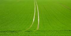 Champ de blé - Wheat field, Bioussac, Charente (blafond) Tags: green field countryside vert campagne charente champ wheatfield champdeblé bioussac