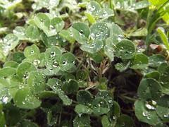 DSCF6219 (Sir.Cuna) Tags: naturaleza lluvia gotas treboles