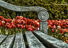 Sliding into a bench HBM! (mark-marshall) Tags: photoshop bench tulips nik hbm hss sliderssunday nikon18140mmf3556gedvrii
