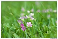 2016-04-05_005 (Aaron Cat) Tags: flowers plants macro canon eos hsinchu taiwan usm f28   ef100mm 400d   aaronhsu