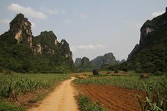 Nongang/ 0701 (Petr Novk ()) Tags: china landscape countryside asia hill plantation asie   karst   sugarcane guangxi     na nongang   longzhoucounty
