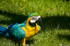 _DSC5693 (alessandro.spagnolli) Tags: zoo natura tamronlens naturalistica lecornelle parcofaunistico sonyalpha77