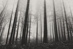 Not everything you'll find will be perfect gold (valentin.schoenpos) Tags: wood morning trees blackandwhite bw white mist black tree nature misty fog forest landscape photography landscapes woods mood foggy