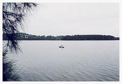 Black Swans (Anita Waters) Tags: two lake black film fuji superia olympus swans 400 analogue narrabeen xtra om2n