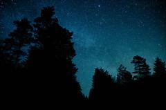 A mountain of trees (Stle Meyer) Tags: longexposure blue trees black tree norway night dark stars norge nikon nightscape nightshot nightsky akershus milkyway hurdal eidsvoll