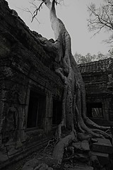 Banyan 2 (alistair_ritchie) Tags: temple cambodia banyantree
