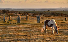 The Hurlers at Minions, Bodmin Moor, Cornwall (Baz Richardson) Tags: cornwall ponies wildponies bodminmoor minions henges thehurlers neolithicstonecircles