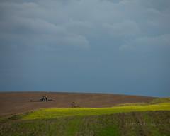 l_3U4A8643_MartenSvensson (Bad-Duck) Tags: traktor hst landskap moln mnniska flt rstid ringvlt