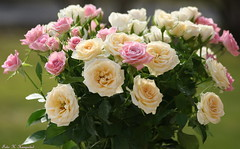 A bunch of beauties (K. Haagestad) Tags: flowers roses petals bloom bouquet