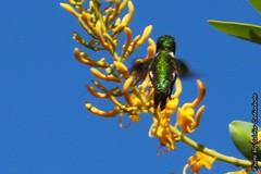 Beija-flor (3) (valdircodinhoto) Tags: parque brasil fauna go flor pssaro dos jorge ave cerrado alto nacional beijaflor so chapada veadeiros paraso gois voo colibri centrooeste