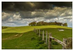 Towards Cissbury Ring (go18lf2004) Tags: light weather clouds woodland track shadows sheep hillside southdowns fenceline copse cissbury