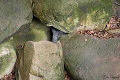 Gut versteckt (dieunsoziale) Tags: zoo katze osnabrck tier luchs raubtier