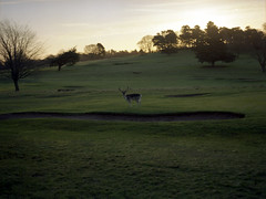 Stag (ss9679) Tags: nottingham colour 120 film nature analog sunrise mediumformat 645 stag wildlife deer bronica portra f28 wollatonpark 75mm portra400 etrs kodakportra mittelformat zenzanon epson4180 zenzanoneii