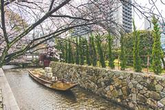 -  (Vince-leo) Tags: plant flower japan cherry spring kyoto    sakura cherryblossoms kansai         nikond810