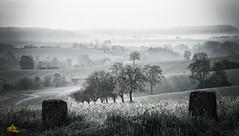 Misty Twilight (Andy Brandl (PhotonMix.com)) Tags: trees green rural germany landscape tranquility hills fields damp mistymorning kraichgau photonmix