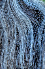 Mane gone grey (dave.fergy) Tags: people horse abstract animals hair pattern mammals bodypart