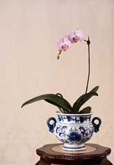 Orchid (WanFang) Tags: blue plant orchid flower vase