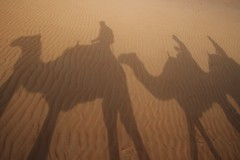 Camel shadows (sonofwalrus) Tags: slr canon sand waves shadows desert dunes uae camels  theemptyquarter eos7d