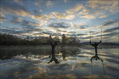 Reflejos (Jose Cantorna) Tags: pantano agua nubes reflejos árboles álava araba euskadi nikon d610 xxviiexposicionalavavisionembalsesylagunas