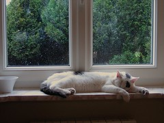 Juju se repose - son hyperthyrodie lui rend la vie difficile... (Lili-Vanille) Tags: window cat chat pluie fatigue spleen sieste somme