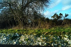 Devils Dyke road cut into chalk (Lord Cogsby) Tags: road chalk dyke