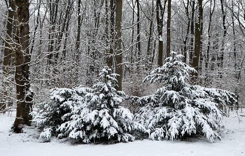 Winter im Tiergarten