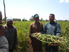 Picture34 (ICARDA-Science for Better Livelihoods in Dry Areas) Tags: farmers northafrica climatechange mena pulses ifad nutrition resilience drylands icarda incomes westasia croprotation seedsystems conservationagriculture euifad wheatlegumecroppingsystems