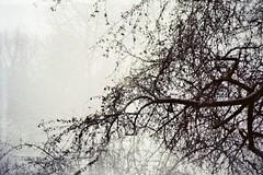 (AirSonka) Tags: winter tree film silhouette analog 35mm lomo branches toycamera january multipleexposure multiple analogue smena smena8m multiplied pelcula kodak200 filmphotography pellicule airsonka mehrfachbelichtung soniakaniss