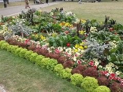 Bristol College Green (Le Muse di Scicli) Tags: park uk flowers red parco white verde green nature vegetables yellow bristol natura giallo organic fiori rosso bianco collegegreen ortaggi bristolcitycenter
