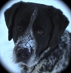 t'as une bonne tte :o) (bulbocode909) Tags: hiver neige animaux chiens